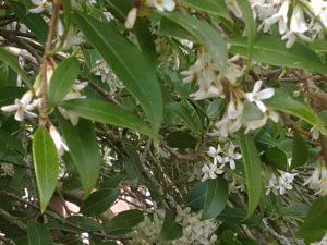 Spring foliage/flowers